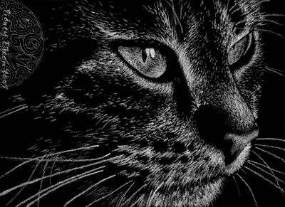 Title: Gazing Tabby ACEO, Artist: Sidney Eileen, Medium: white pencil on black paper
