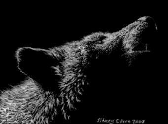 Title: Howling ACEO, Artist: Sidney Eileen, Medium: white pencil on black paper