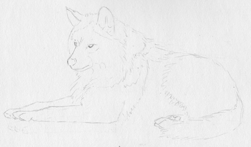 how to draw fur with graphite pencil from a reference photo by