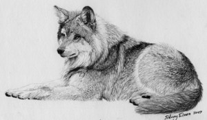 "Final Drawing ""Contemplation"" - How to Draw Fur with Graphite Pencil From a Reference Photo, by Sidney Eileen"
