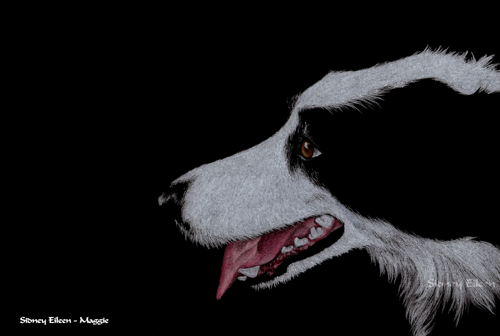"""Maggie, 5""""x7"""" colored pencil on black paper, by Sidney Eileen"""