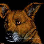 "Tramp ACEO, Colored pencil on black paper, ACEO size, 2.5""x3.5"", by Sidney Eileen"