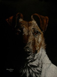 """Donation Commission - Terrier, 9""""x12"""" colored pencil on black paper, by Sidney Eileen"""