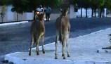 Moradores reclamam dos animais soltos nas ruas