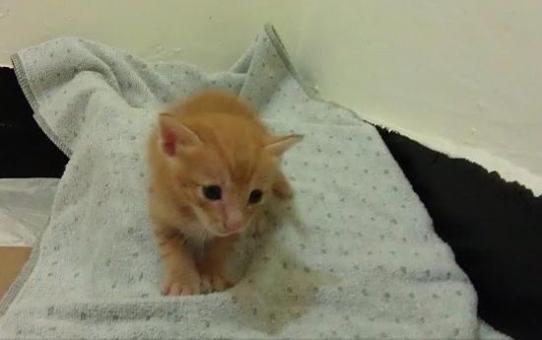 小小橘子貓待認養-四周大