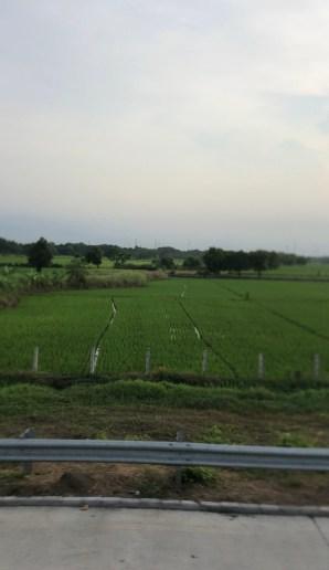Reisfelder vor Surabaya