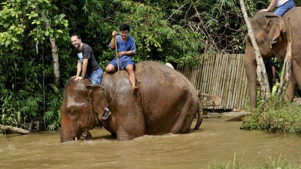Il danse avec les éléphants - thailande, hotels, a-faire