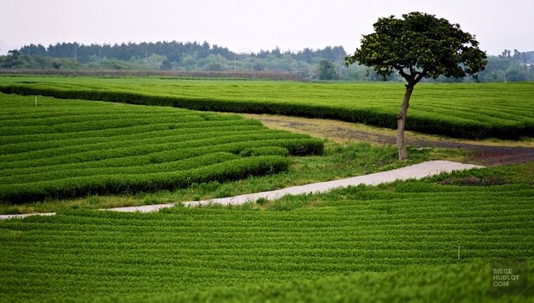 26190027 - L'île de Jeju - coree-du-sud, asie, a-faire