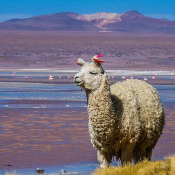 Bolivie 4