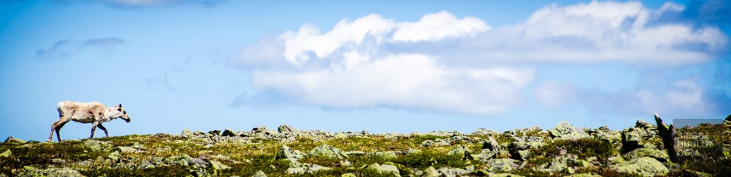 gasp-3407 - Bonaventure, pour mieux découvrir la Gaspésie! - quebec, featured, destinations, canada, a-faire