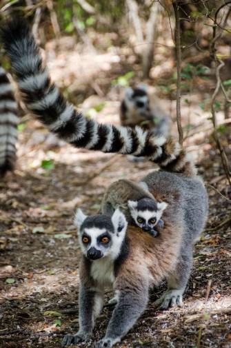 MadaRN7-7488 - Road trip à Madagascar! Partie 1 - rode-trip, madagascar, featured, destinations, afrique