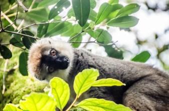 MadaRN7-7827 - Road trip à Madagascar! Partie 1 - rode-trip, madagascar, featured, destinations, afrique