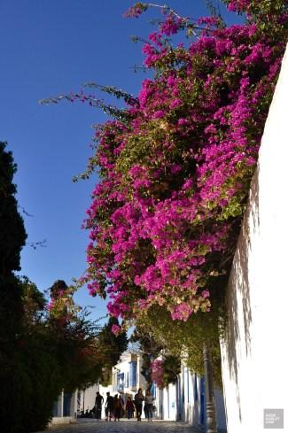 rues fleurs - Sidi Bou Saïd - Tunisie, de la mer au désert - Afrique, Tunisie