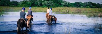chevaux-equitation-marais-Pantanal-Plage-et-nature-au-Bresil-Amerique-Bresil - Copy - Plages et nature au Brésil - bresil, amerique-centrale-sud