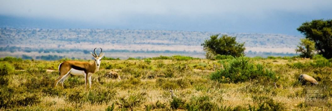 gazelle paysage - randonnee en montagne - Dose d adrenaline en Afrique du Sud - Afrique, Afrique du Sud