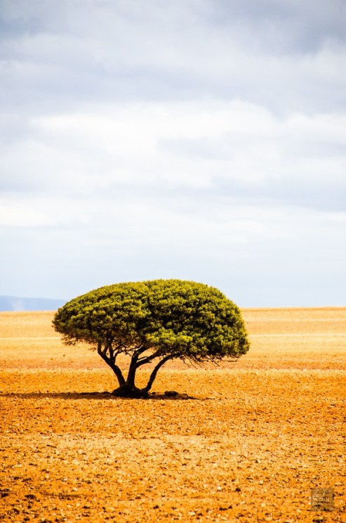 paysage arbre - Ocean Atlantique vs Ocean Indien - Dose d adrenaline en Afrique du Sud - Afrique, Afrique du Sud