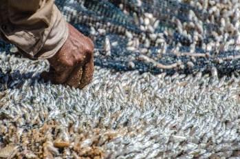 petits poissons - La cote sauvage de Tangalle - Les plages du Sri Lanka et plus encore - Asie, Sri Lanka