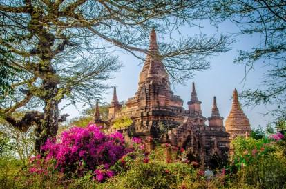 temple vegetation - Bagan, capitale de l ancien royaume de Pagan - A la recherche du temple perdu Bagan, Myanmar - Asie, Myanmar