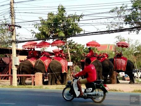 Un camp d'éléphants (non recommandé) - Et quoi d'autre? - Le parc historique d'Ayutthaya - Destination, Asie, Thaïlande