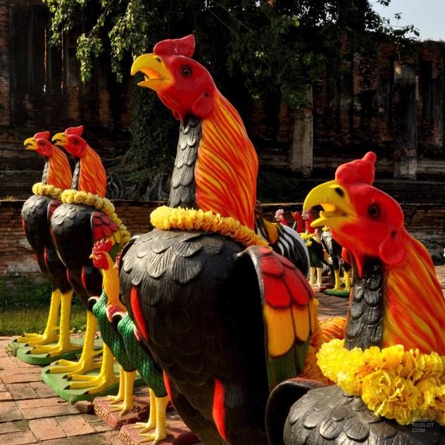 Les coqs défendent le temple - Et quoi d'autre? - Le parc historique d'Ayutthaya - Destination, Asie, Thaïlande