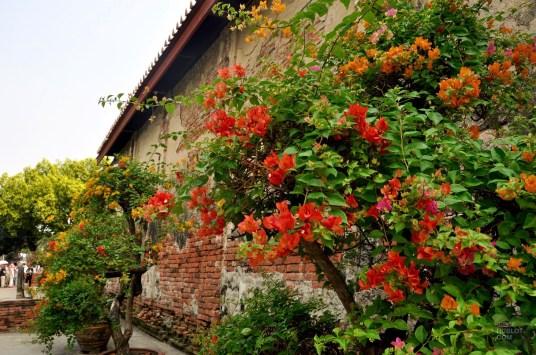 Des fleurs et de la couleur - Ayutthaya, Thaïlande - Le parc historique d'Ayutthaya - Destination, Asie, Thaïlande