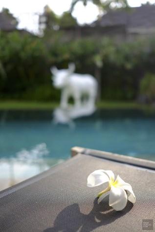 Fleur de frangipanier - Villa Issi - Vivre le rêve à Bali - Asie, Indonésie, Hôtels