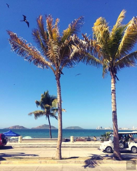 Une promenade en pulmonia - Mazatlan, Sinaloa, Mexique - Boutique hôtel - Amérique du Nord