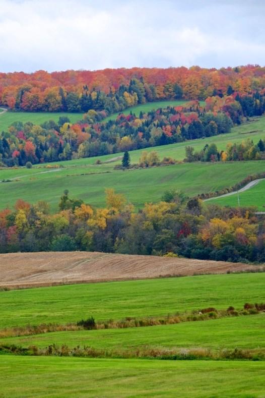 Les couleurs d'automne - Bleuetière Goulet - Balade en Beauce - Amérique du Nord, Canada, Québec, Chaudière-Appalaches