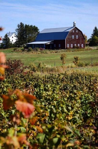 Une ferme à Amouraska - La région - Un épicurien à Rivière-du-Loup - Amérique du Nord, Canada, Québec, Bas St-Laurent
