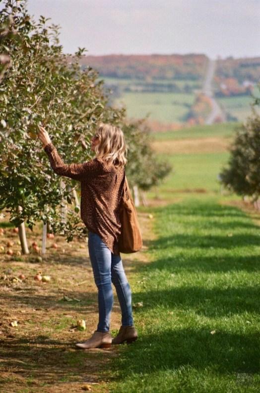 Les pommes - Le verger à Ti-Paul - Balade en Beauce - Amérique du Nord, Canada, Québec, Chaudière-Appalaches