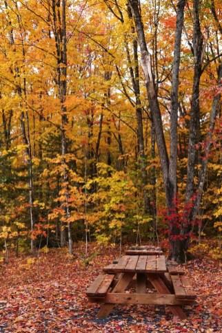 La nature - Quelques idées supplémentaires - Balade en Beauce - Amérique du Nord, Canada, Québec, Chaudière-Appalaches
