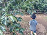 田舎で子育てするデメリットは選択肢が減ること。子供の可能性を狭める?