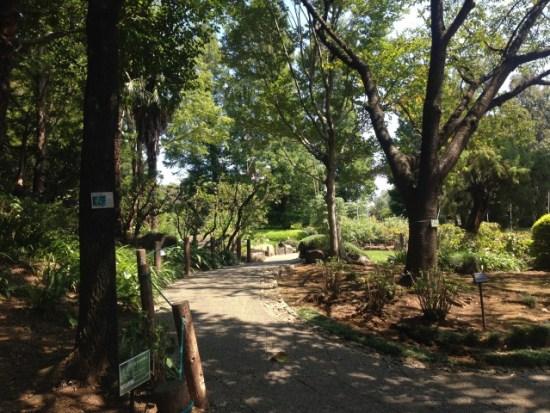 グリーンセンターの歩道