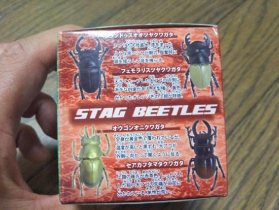 甲虫コレクション