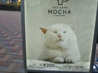 CAT CAFE MOCHAに行ってきた。お店が広くてきれい!初めての猫カフェに子供が大喜び