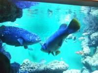 涼しい・小学生以下無料の葛西臨海水族園は夏休みにおすすめだけど大混雑