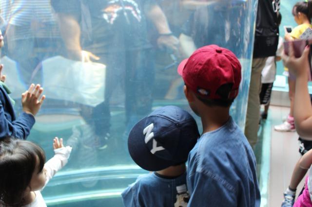 旭山動物園の子供たち
