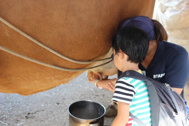イバライドの乳搾り体験