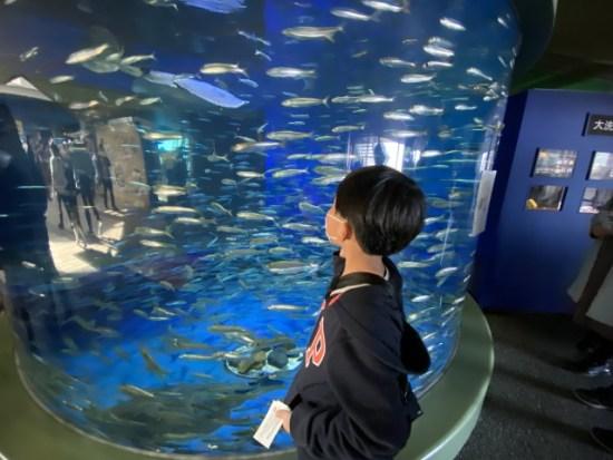 アクアワールド大洗水族館