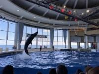 海沿いのアクアワールド大洗水族館が楽しい。サメ・マンボウ日本一の水族館