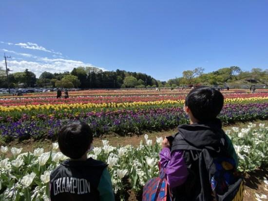 あけぼの山農業公園チューリップ子供たち