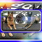 Nala da consejos a Anker, pastor belga en servicio en la Unidad Canina de la Policía Local de La Laguna.