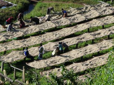 Burundi Drying Fields