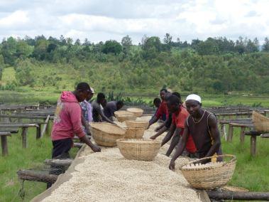 Photo of hand-picking dried beans in Burundi