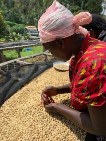 Sorting beans in Kenya
