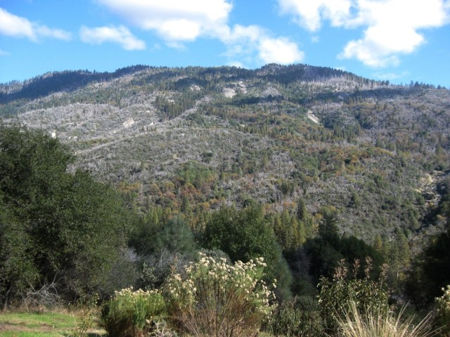 In Aug 2001, Peckinpah Mountain was scarred and burned in the North Fork Fire, along with our entire property. Luckily only the grass and one tree burned before the fire heated up and climbed the mountain. We built our home here 4 years later.