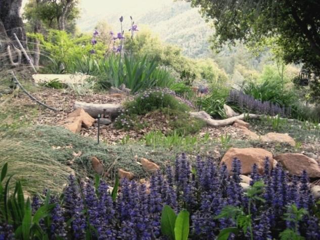 Garden in 2010 Hardly any weeding!
