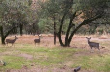 2005 Deer on the lower leach line