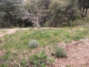Mid April meadow