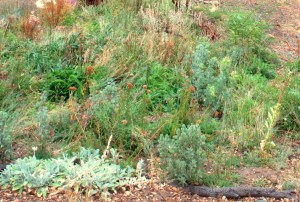 The much greener meadow plants, mixed with perennials